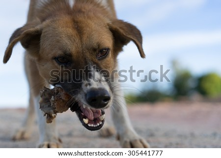 dog eat ,bite bone chicken - stock photo