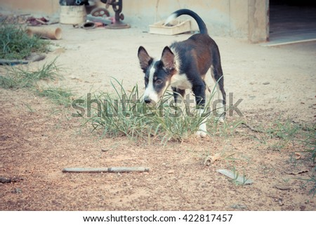Dog eat grass - stock photo