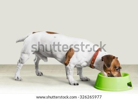 Dog eating. - stock photo