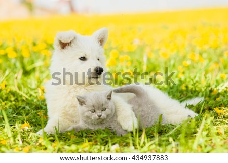 Dog embracing cat on a dandelion field. - stock photo
