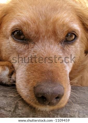 Dog face - stock photo