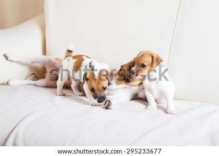 Dog family playing on a white sofa - stock photo