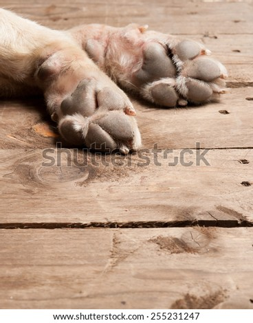 dog feet and legs on wood - stock photo