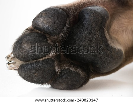dog feet or paw isolated on white background - stock photo