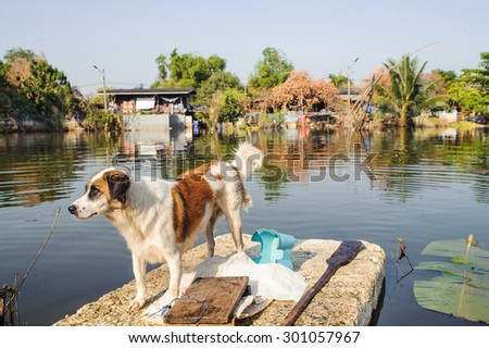 Dog Ferried to Safety on a Flooded Section of Road in Bangkok - stock photo