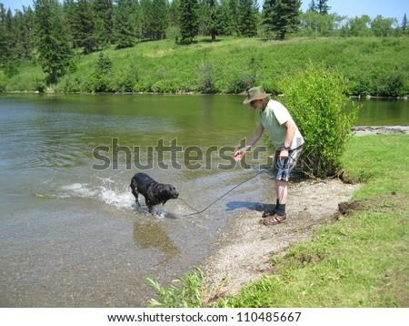 Dog fetch stick - stock photo