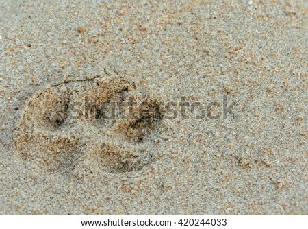 Dog Footprint on Beach - stock photo