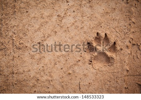 Dog footprint on the earth - stock photo