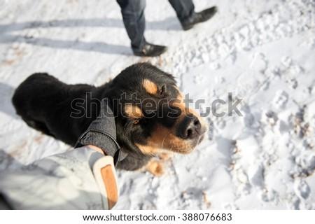 Dog for adoption - stock photo