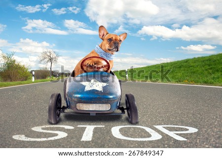 dog (French bulldog) driving a toy car, dog enjoys a a ride in his blue old car - stock photo