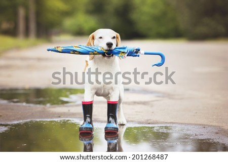 dog holding an umbrella - stock photo