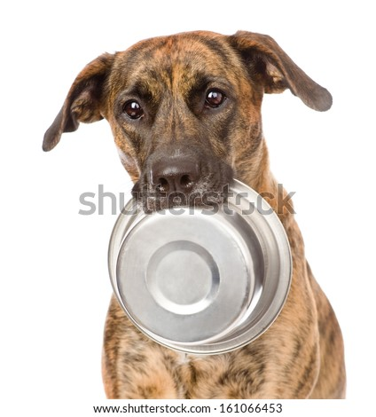 dog  holding bowl in mouth. isolated on white background - stock photo