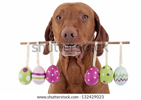 dog holding Easter egg  decorations on a stick - stock photo