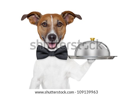 dog holding service tray and cover - stock photo