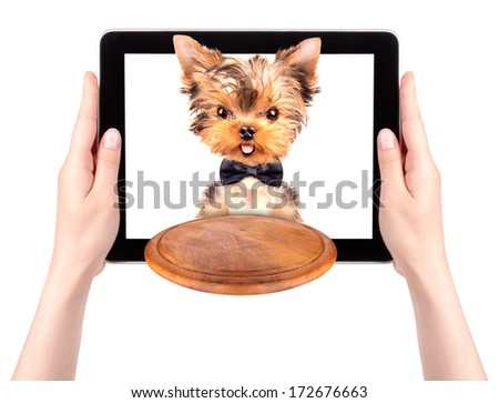 dog holding service tray on a digital tablet screen - stock photo