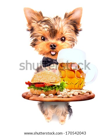 dog holding service tray with food and drink -  beer and hamburger - stock photo