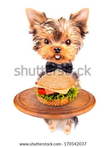 dog holding service tray with food -  hamburger - stock photo
