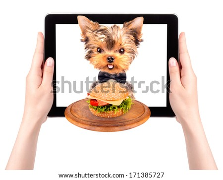 dog holding service tray with food on a digital tablet screen - stock photo