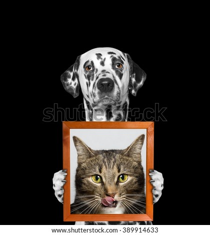 dog holds a portrait of cat in its paws -- isolate on black background - stock photo