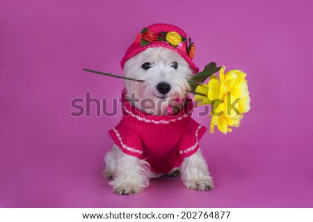 dog in a pink dress and hat with flower - stock photo