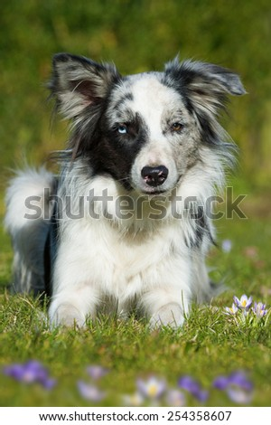 Dog in a spring meadow - stock photo