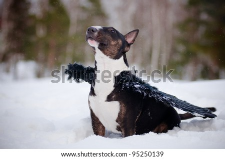 dog in an angel costume dark wings - stock photo