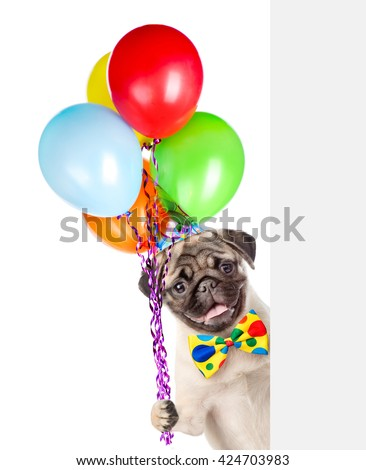 Dog in birthday hat holding balloons peeking from behind empty board. isolated on white background - stock photo
