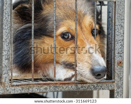 Dog in cage, unhappy face with nose stick out - stock photo