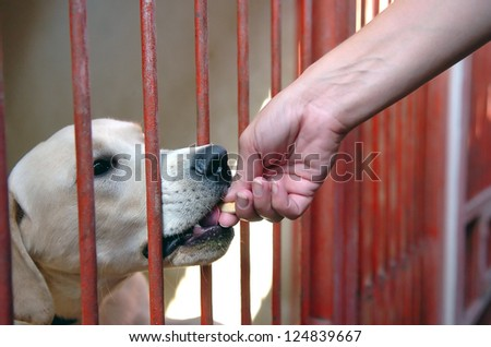 Dog in his cage at the animal - stock photo