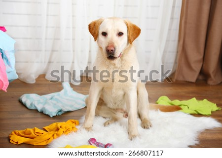 Dog in messy room - stock photo