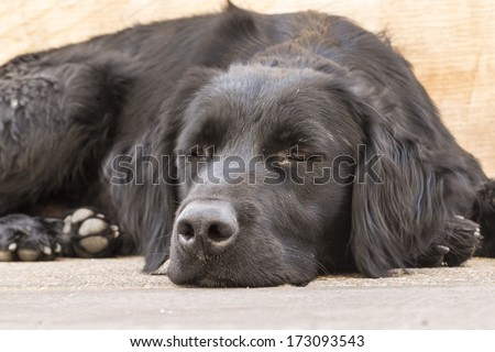 dog in santiago de chile - stock photo
