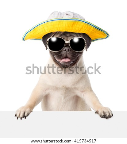 Dog  in sunglasses and hat peeking from behind empty board. isolated on white background - stock photo