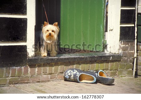 Dog in the doorway of a typical old Dutch house.Outside on the street a pair iof original Dutch wooden shoes - stock photo