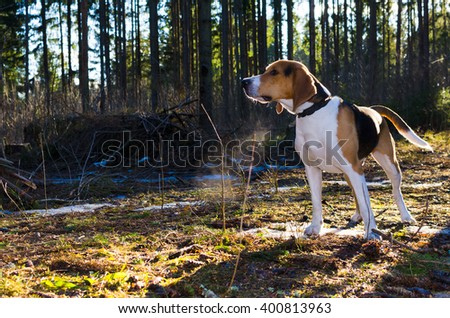 Dog in the forest stay and wait - stock photo