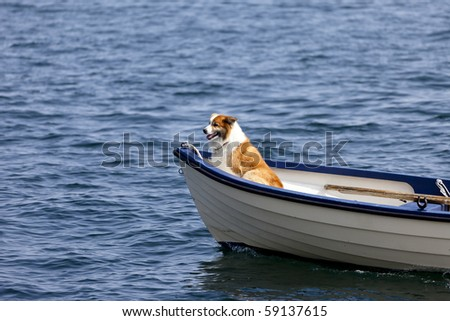Dog in the front of a small boat - stock photo