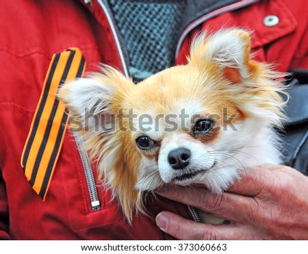 dog in the hands of veteran - stock photo