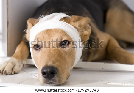 Dog in veterinary clinic - stock photo