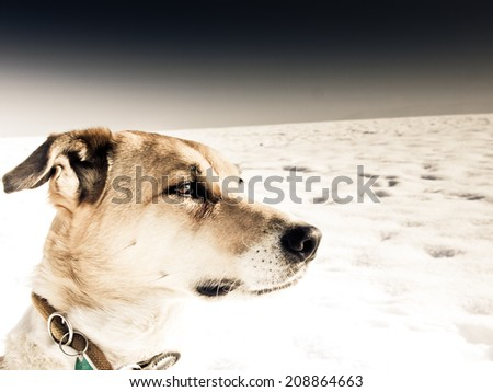 dog in winter landscape with snow - stock photo