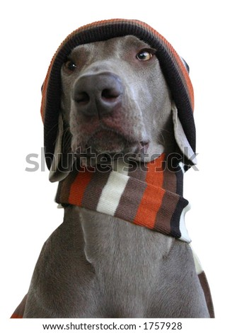 dog in winter look 1 - stock photo