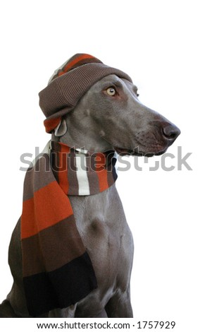 dog in winter look 2 - stock photo