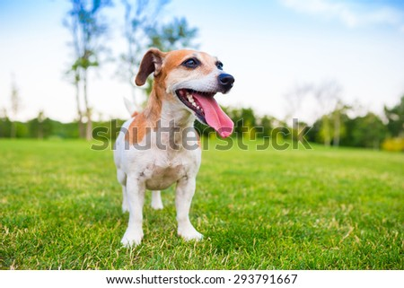 Dog is active on the background of beautiful bright summer nature. Tired after active play, breathing heavily with his tongue out - stock photo
