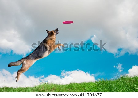 Dog is going to play disc in the sky - stock photo