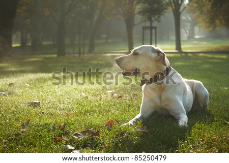 Dog is lying in park - autumn - stock photo