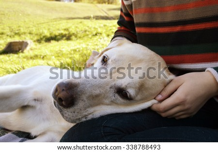 dog is man's best friend.Labrador Retriever wrapped scarf lying on the plaid in the autumn park.autumn concept - stock photo
