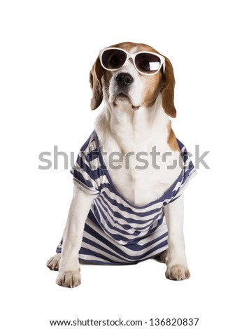 Dog is posing in studio - isolated on white background - stock photo