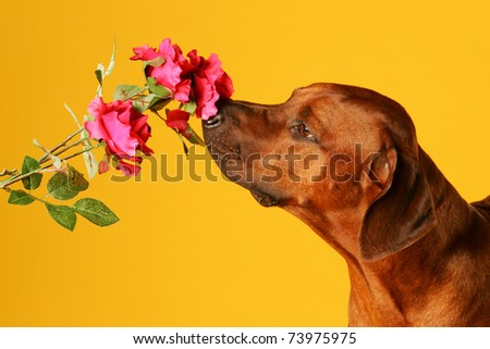 dog is sniffing on flower - stock photo