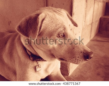 Dog is staff for home. Vintage tone.  - stock photo