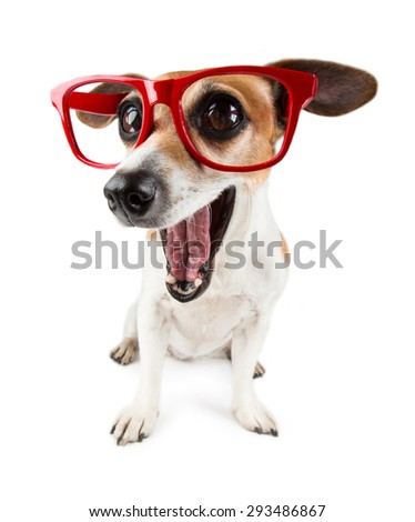 Dog is surprised and so happy about it. Closeup headshot. White background - stock photo