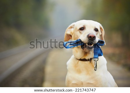 Dog is waiting for the owner on the railway platform  - stock photo