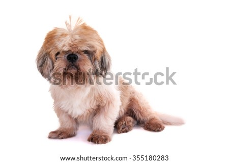dog isolated on white background - stock photo